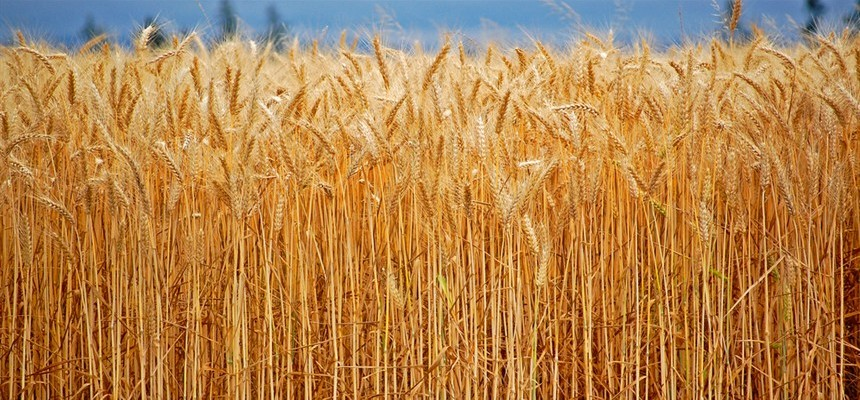 5 Good Minutes With God Discerning Wheat And Weeds Part 2